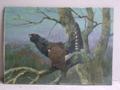 Immagine di Dipinto ad olio Gallo cedrone di Karl Deiker