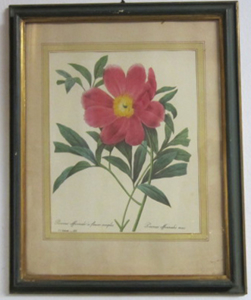 Picture of Print Poenia officinalis (Peony)