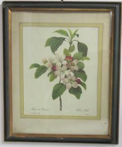 Picture of Print Fleur de pommier (apple's flower)