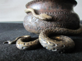 Immagine di Vaso in ferro forgiato e dipinto con Serpente