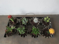 Immagine di Forme per budini - Vasi per mini cactus