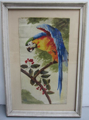 Picture of Tempera painting on paper Parrot by Tat 29