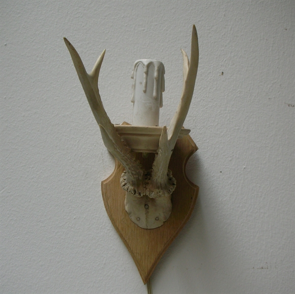 Picture of White Roe deer antlers with skull wall lamp n° 20