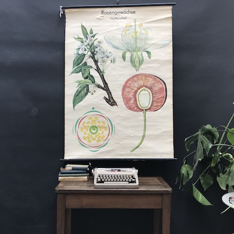 Picture of School botanical posters