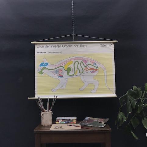 Immagine di Cartelli didattici animali domestici