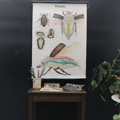 Picture of Insects school posters