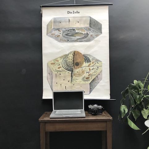 Immagine di Cartelli didattici cellule