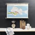 cartello didattico n° 50 pesce persico organi cm 102 x h 67