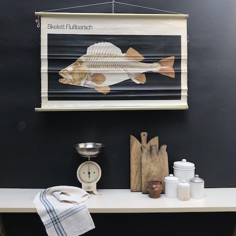 cartello didattico n° 49 pesce persico scheletro cm 102 x h 70
