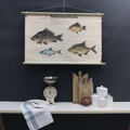 cartello didattico n° 51 pesci d'acqua dolce cm 102 x h 67