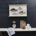 cartello didattico n° 52 pesci d'acqua dolce piccolo cm 87 x h 57