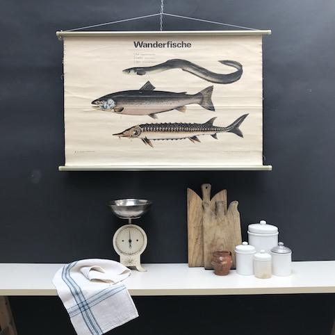 cartello didattico n° 53 pesci migratori cm 102 x h 67