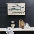 cartello didattico n° 54 pesci migratori cm 87 x h 57
