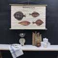 cartello didattico n° 55 pesci marini tafel II cm 102 x h 66