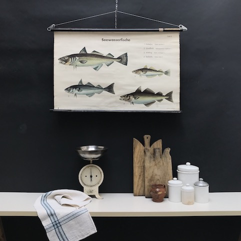 cartello didattico n° 57 pesci marini tafel II cm 87 x h 56