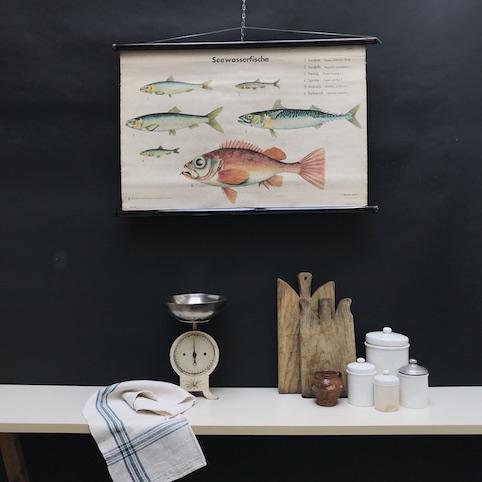 cartello didattico n° 58 pesci marini tafel I cm 87 x h 67
