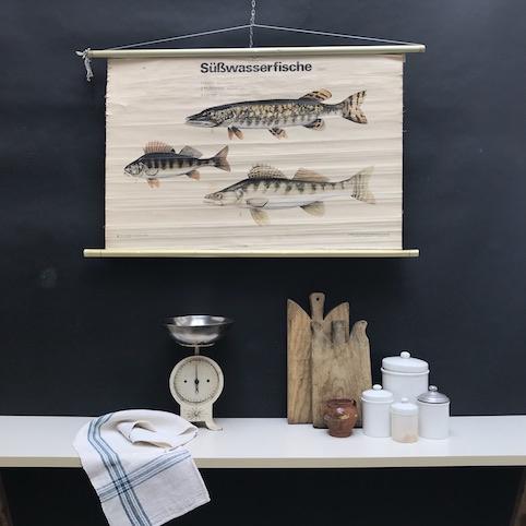cartello didattico n° 59 pesci d'acqua dolce tafel II cm 102 x h 64