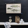 cartello didattico n° 60 pesci d'acqua dolce tafel II cm 87 x h 58