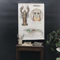 Immagine di Cartelli didattici animali